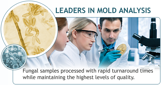 LEADERS IN MOLD ANALYSIS